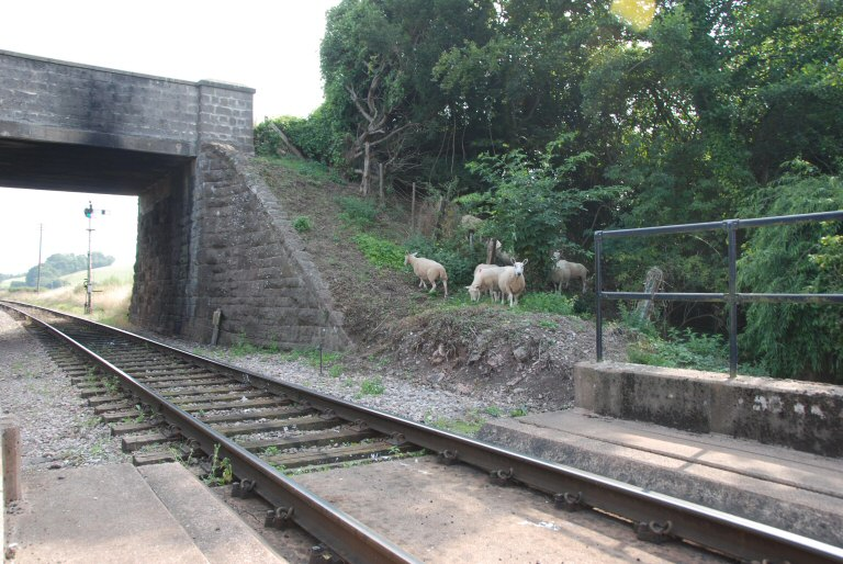 2013 - Sheep on the line at Williton Bridge created a few operational problems on 28 August. This work is licenced under a Creative Commons Licence. © Bev Zehetmeier.