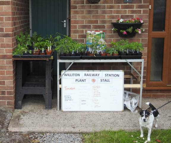 2020.05.06. Plant sales stands at 7 Dovetons Drive, Williton, to raise station funds. © Barrie Leete